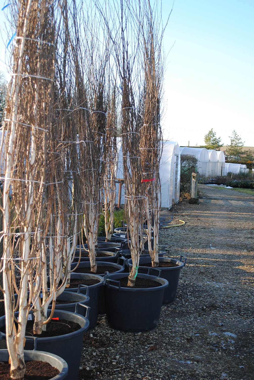 wholesale plant nursery south oxfordshire
