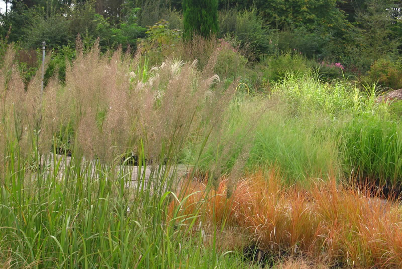 Ornamental Grasses watlington oxfordshire