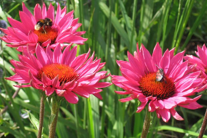 Wholesale plant nurseries Oxfordshire