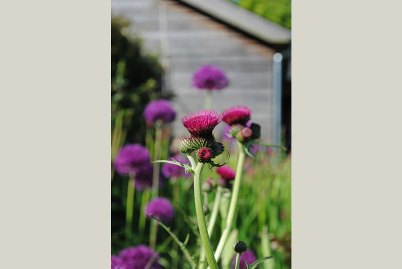 plant nursery near henley on thames