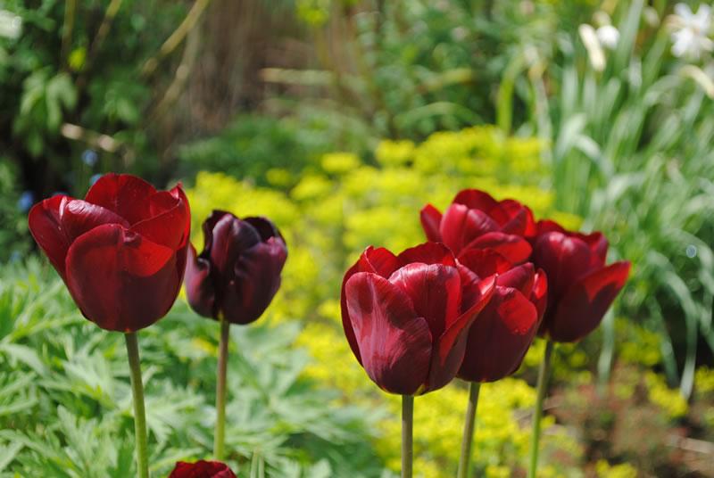 babylon plants wholesale plant nursery oxfordshire