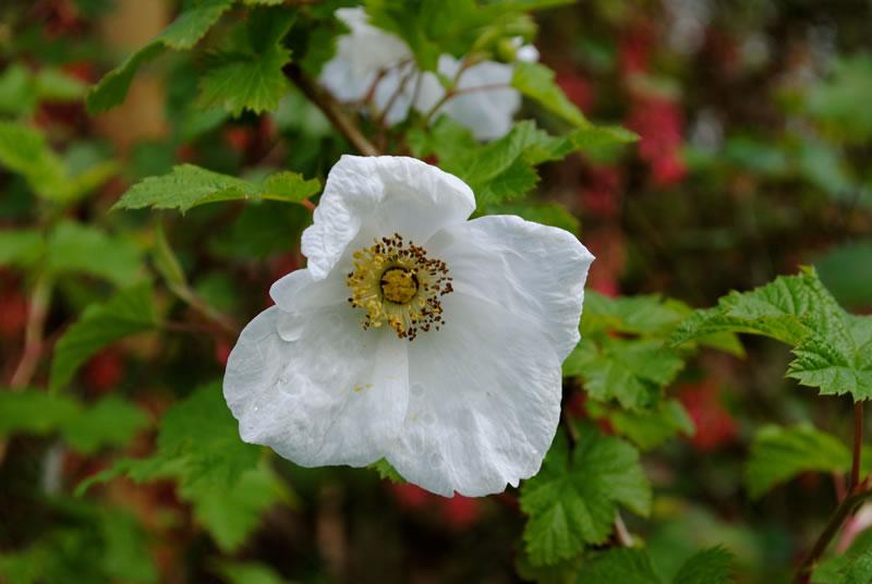 photographs of shrubs image2