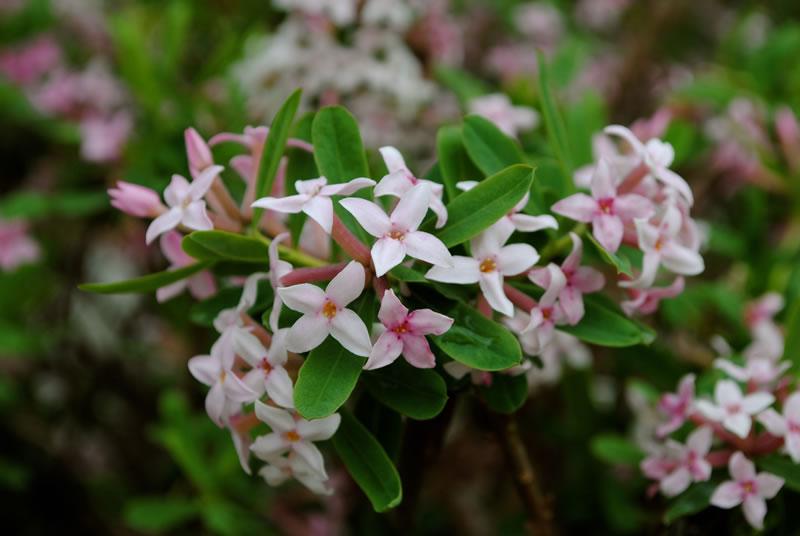 photograph of shrubs