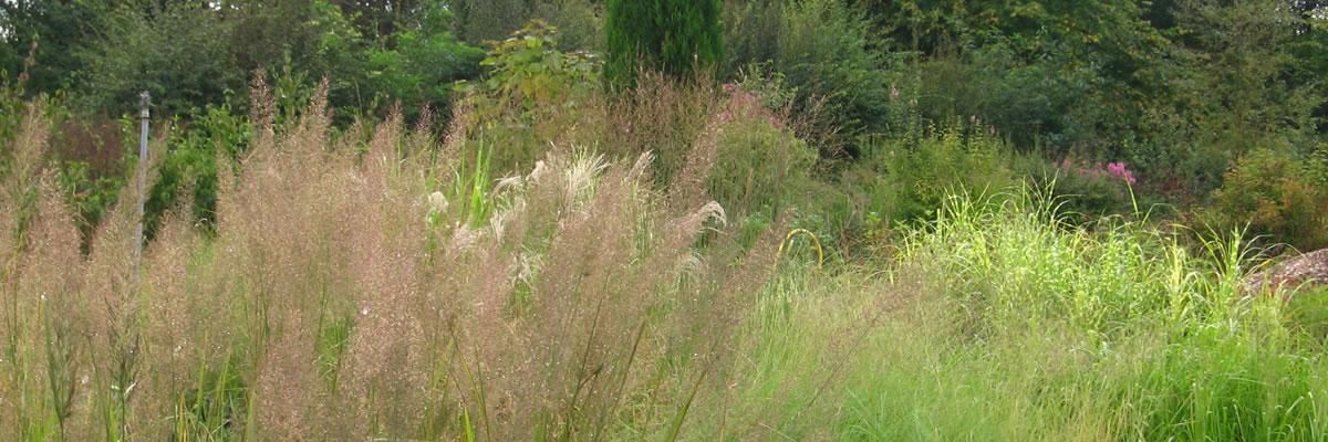 wholesale plant sales in Oxfordshire Babylon Plants photograph of grasses