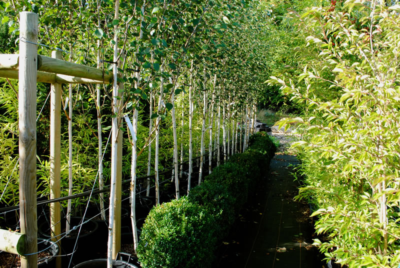 trees oxfordshire wholesale plant nursery