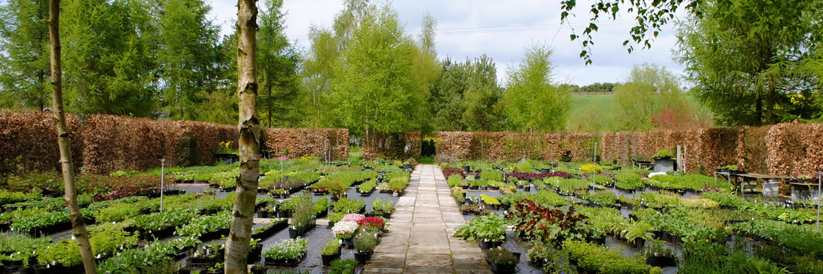 wholesale plant nursery Watlington Oxfordshire